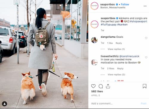 A woman with her back turned is exploring Boston Seaport two corgis walking beside her.